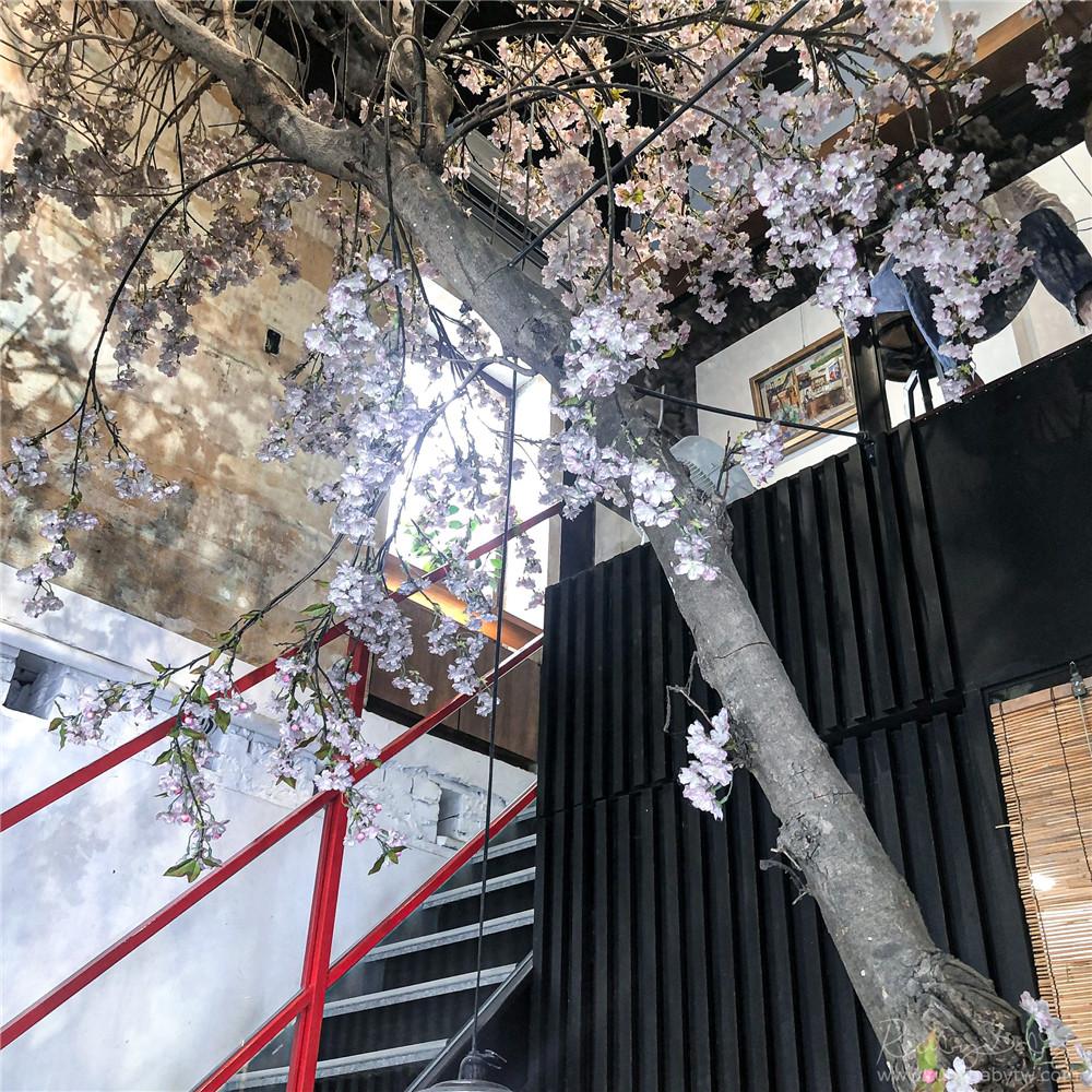 花見宇治抹茶甘味処櫻花樹